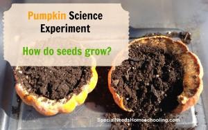 Pumpkin Science Experiment
